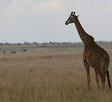 Morning on the Mara. by stewartshang