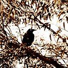 Crow by Craig Shillington