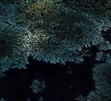 0136 - HDR Panorama - Lichen 7 by wetdryvac