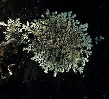 0138 - HDR Panorama - Lichen 8 by wetdryvac
