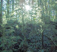 Sun Backlighting Rainforest by LiTaoRen