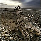 Driftwood Sans Drift by Peter Kurdulija