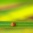 Ladybug - Laguna Whitsundays by JenniferW
