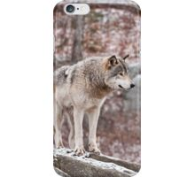Timber Wolf on Outcropping iPhone Case/Skin
