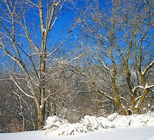 Blue Sky Winter Scene by Mary Kaderabek-Aleckson