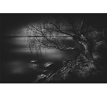 Once upon a tree Photographic Print