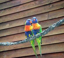 Rainbow Lorikeets by Wanda  Mascari
