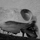 Skull by Neil Baffert