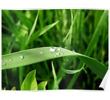 Dew on Grass Poster