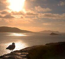Dingle Peninsula, Co.Kerry, Ireland by Michael Walsh