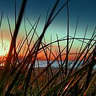 Sunset Grass. by Basia McAuley