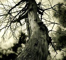 Deadwood by Naomi Frost