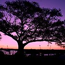 Tree On Observatory Hill Sydney NSW by MiImages