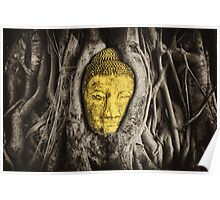Buddha in Roots Poster