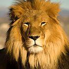 King of Beasts by sarrobi