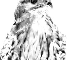 Red Tailed Hawk by Dave  Knowles