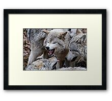 Do you get it now! Framed Print