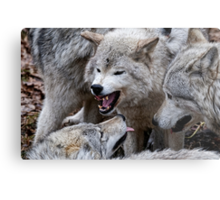 Do you get it now! Metal Print