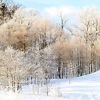 Frosty Morning 3 by BarbL