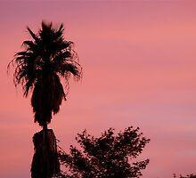 Purple Palm by Scott Pierce