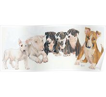 Bull Terrier Puppies Poster