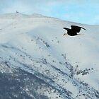 Flying On The Snowy Peaks 2 by loriclint