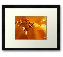 Ladybird Rose Framed Print