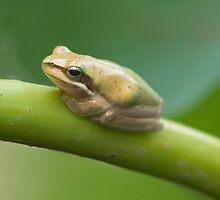 Froggy by Stephanie Johnson
