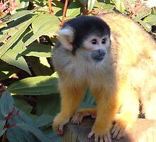 Blacktop Squirrel Monkey by whyteali