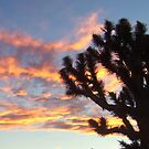 joshua tree sunset by cher