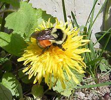 Busy Bee by Martha Medford