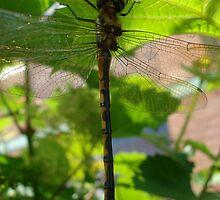 dragon fly 1 by kveta