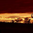 Windmill Sunset  by amygee