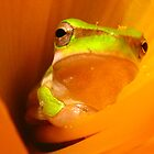 cool frog by Belinda Cottee