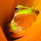 cool frog by Belinda Cottee