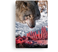 Timber Wolf with Carcass Canvas Print