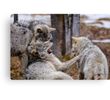 Go away thats too funny  Canvas Print