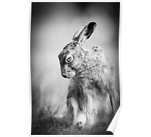 Dark Hare Poster