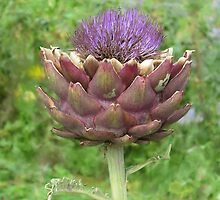 Artichoke by tomheys
