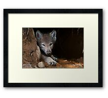 Timber Wolf Pup in Den Framed Print