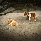 Newforest ponnies by tamilian