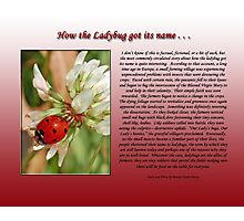 How the Ladybug got its name . . .  Photographic Print