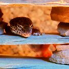 Gecko by PhotoAmbiance