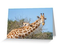 Stretch Your Head on My Shoulder Greeting Card