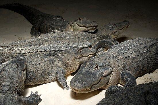 The Gator Club by katyas1983
