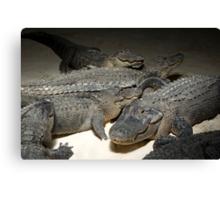 The Gator Club Canvas Print