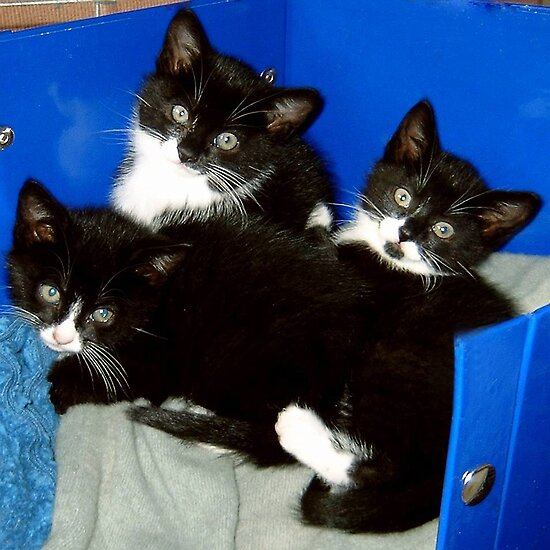Three Little Kittens by Angela Harburn
