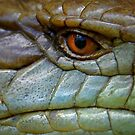 Eyeballed by a Blue Tongue by Graham Jones