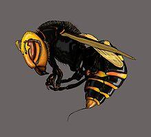 Japanese  wasp by Johan Malm