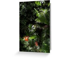 Daintree National Park North Queensland  Greeting Card